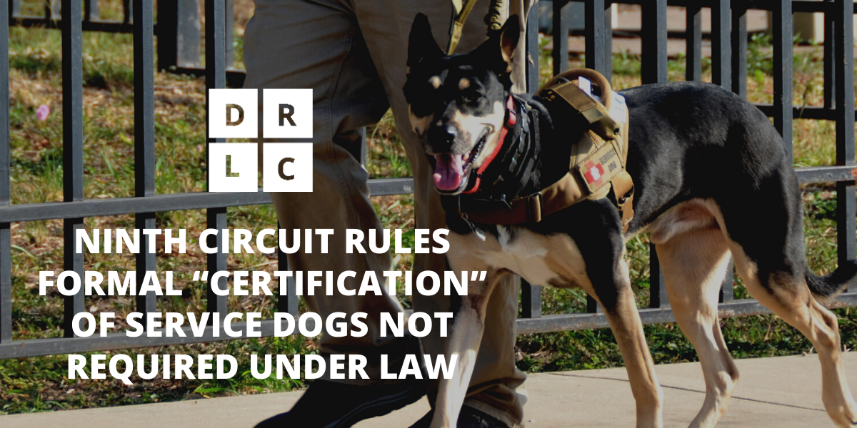 "NINTH CIRCUIT RULES FORMAL ""CERTIFICATION"" OF SERVICE DOGS NOT REQUIRED UNDER LAW. DRLC logo and capitalized san serif white font over image of service dog, wearing harness, looking at camera, walking in front of man, pictured from the waist down."