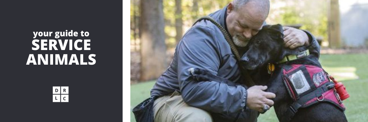 Your guide to service animals (white Open Sans font on dark background with DRLC logo, next to image of person with light skin, graying hair and a beard in a jacket bending over to hug a black lab who is wearing a red service animal vest and leaning against him).